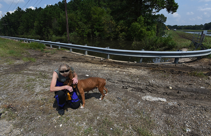 A thin, scared boxer found herself stranded and the Best Friends' disaster response team stepped in to help