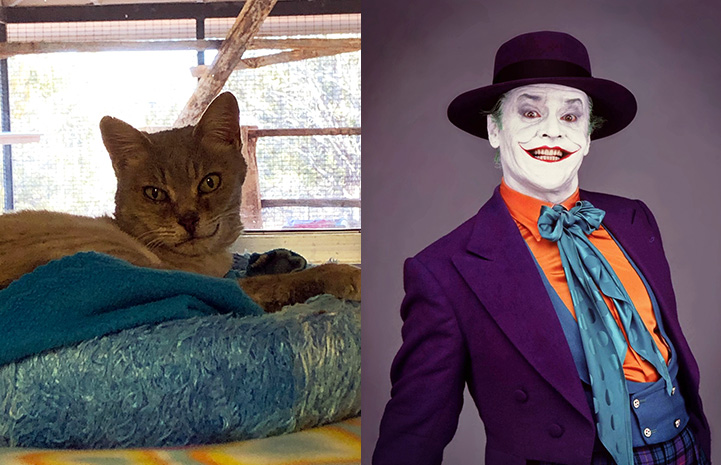 Britney the cat and Jack Nicholson as the Joker as look-alikes