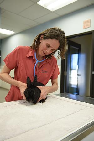 Dr. Patti examines Wilbur the rabbit