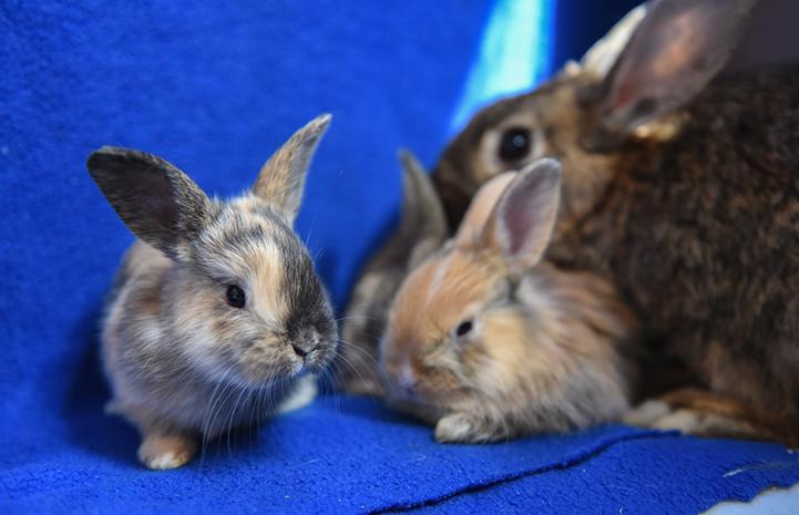Jamie the rabbit with her babies
