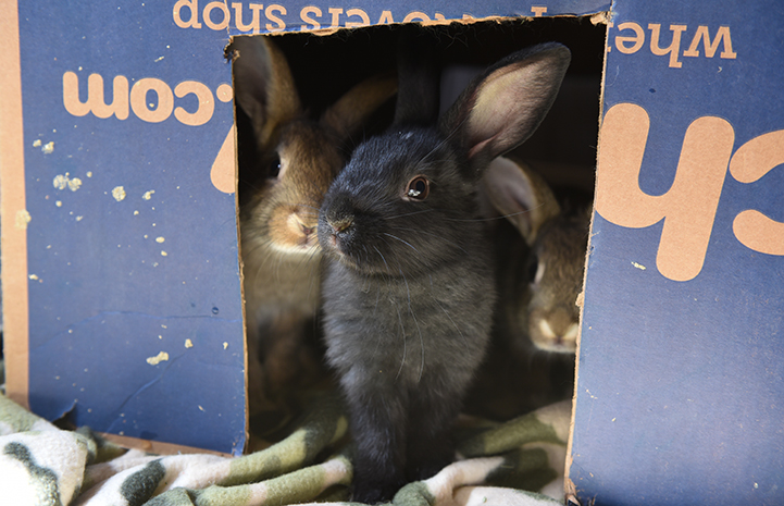 Peppa the rabbit's babies