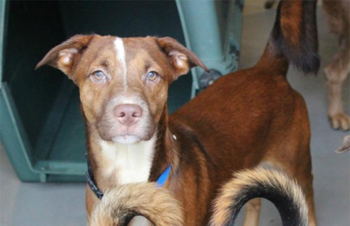 Lip the shy dog rescued in Atlanta