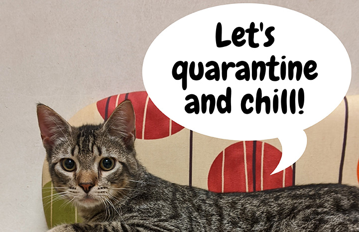 "Brown tabby cat with a talk bubble above him that says, ""Let's quarantine and chill!"""