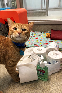 Orange tabby cat next to a pile of toilet paper, hand sanitizer and medical mask