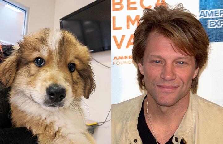 Cribbage the puppy next to Jon Bon Jovi as look-alikes