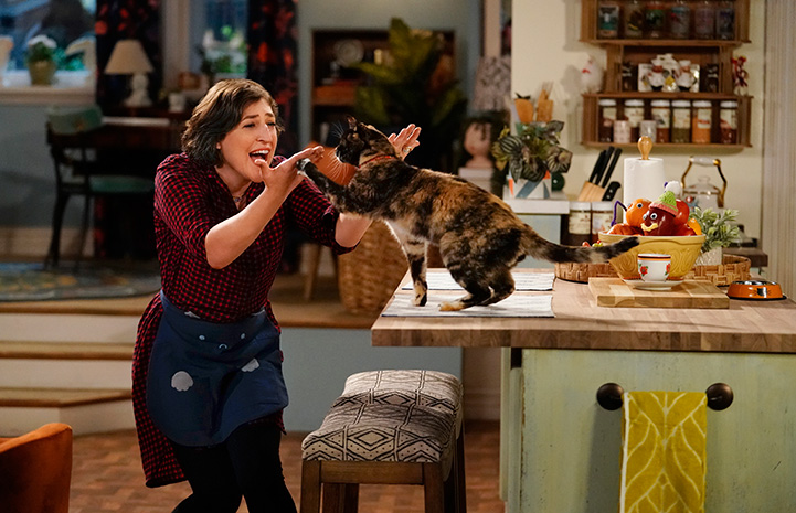 Mayim-Bialik doing a high-five with a calico cat who is standing on a counter on the show 'Call Me Kat'