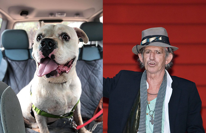 Calvin the dog next to Keith Richards as look-alikes