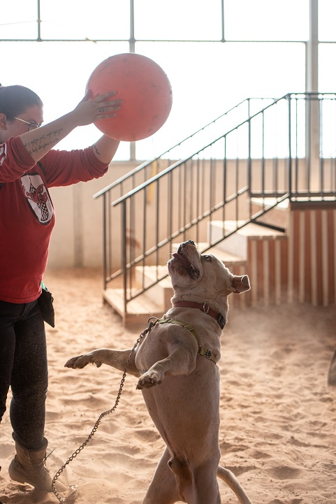 Dog plays with ball at Best Friends Animal Sanctuary