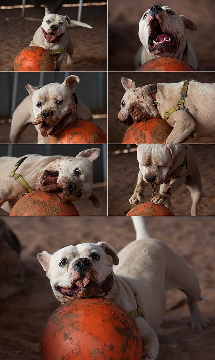 Collage of dog at Best Friends Animal Sanctuary