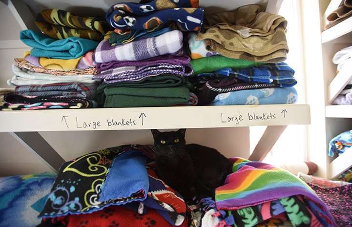 A closet area in Cat World, containing lots of colorful folded blankets with a black cat lying on one stackc