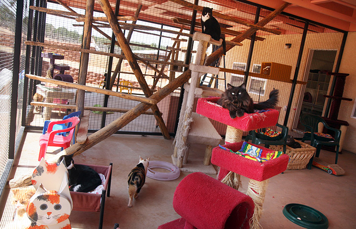 The outside of one of the Calmar rooms with cats in beds and cat trees