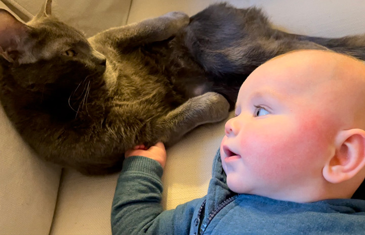 Baby Ollie looking over lovingly at Bruce the cat and reaching out with his little hand