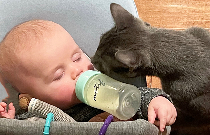 Bruce the cat sniffing Ollie the baby as he drinks from a bottle