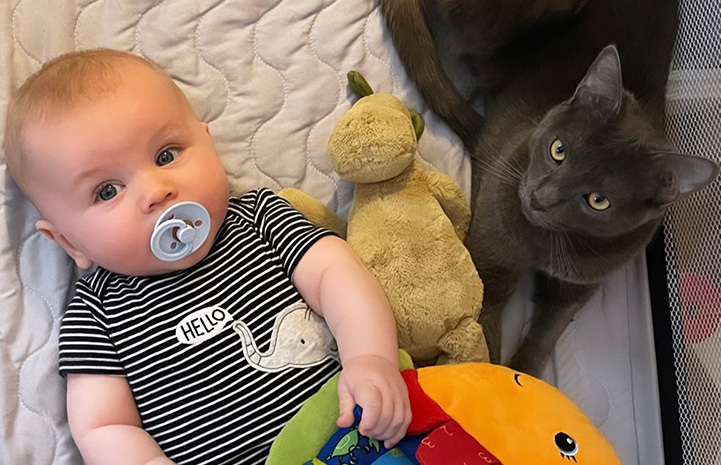 Ollie the baby lying in a playpen with toys and Bruce the cat