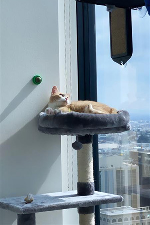 Betsy the cat lying on a cat tree looking out a large window