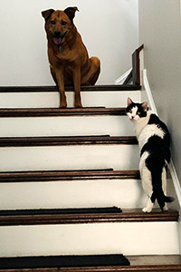 Dizzy the cat on some stairs with her canine pal Schott