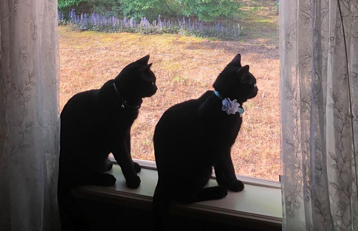 Jordan and Felix the cats sitting next to each other by a window