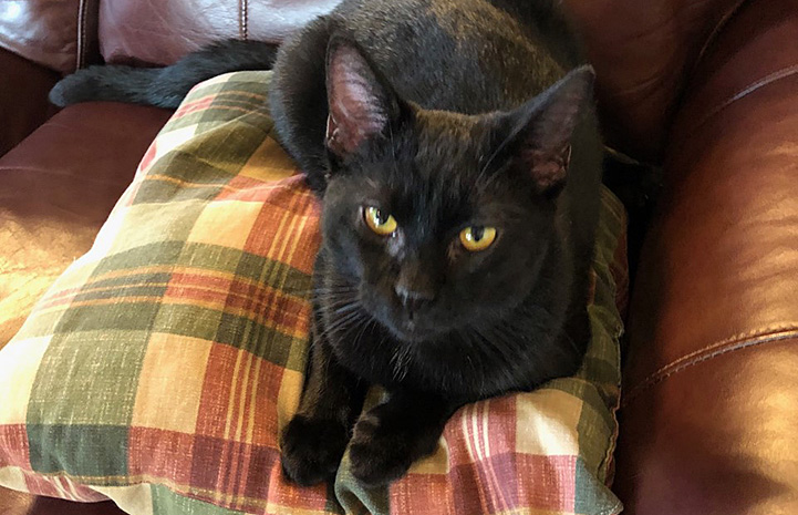 Black cat lying on a plaid colored pillow on a couch