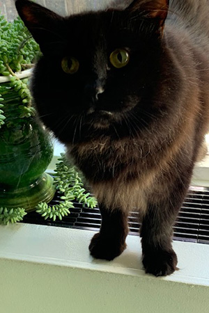 Fern the black cat standing up and looking at the camera