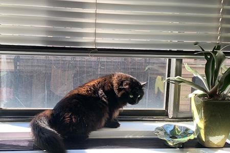 Fern the cat sitting in a window