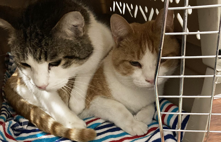 Drew and Jasper the cats together in a carrier