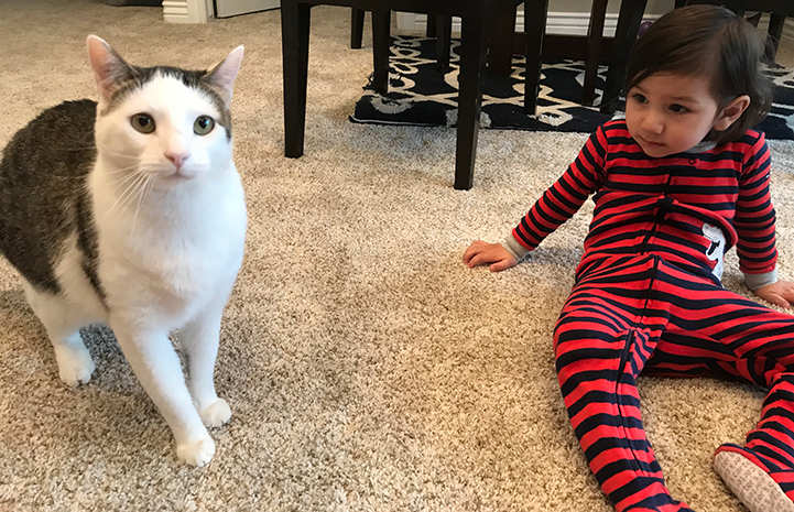 Dwight Schrute, the white and brown tabby cat, with Kanoe, his adopter's young son