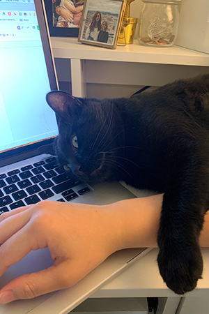 Kent the cat lying on a hand working on a laptop computer