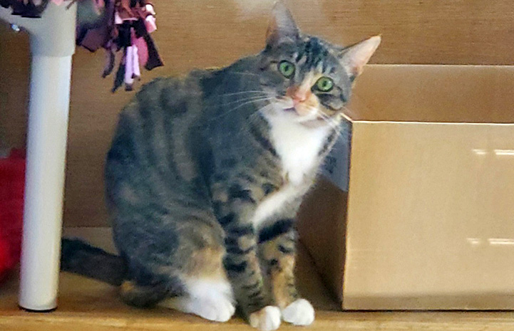 Mila the cat sitting next to a cardboard box