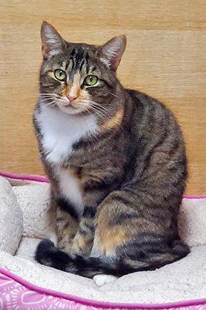 Mila the cat sitting in a cat bed