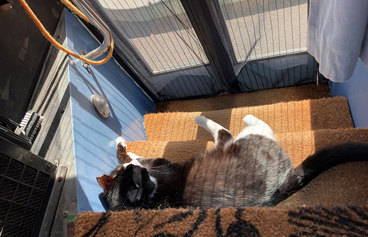 Monroe the cat lying on the bus steps in a sunbeam