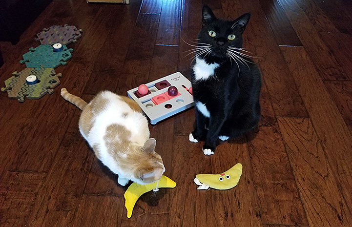 Rosie and Jack the cats on a wooden floor with some banana shaped toys