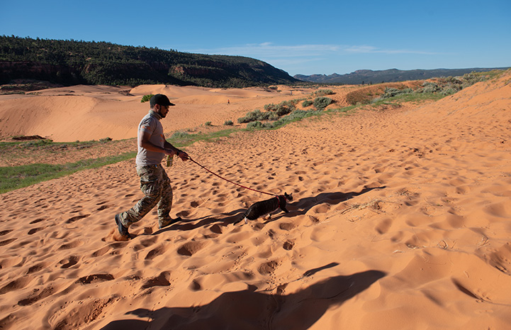 A person walking Tigger the cat on a harness and leash on a sand dune