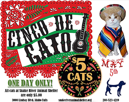 "Cinco de Mayo became ""Cinco de Cato"" at Snake River Animal Shelter in Idaho Falls"