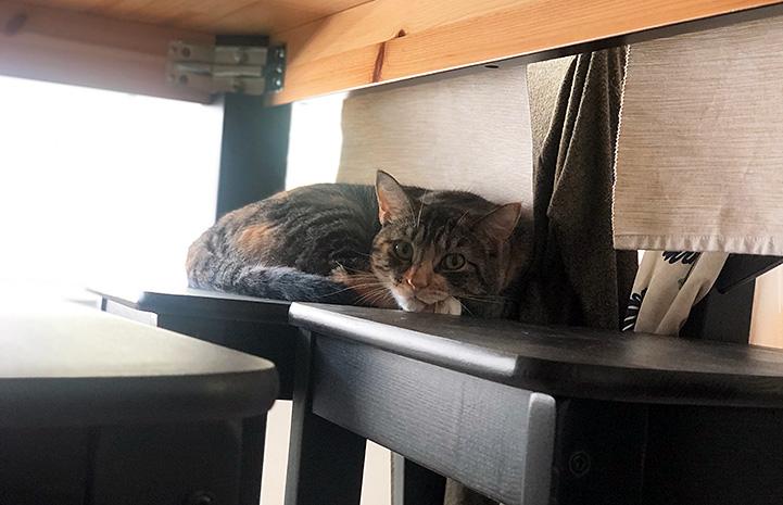 Mila the cat lying on a shelf
