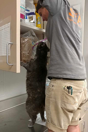 David Lilly reaching into a cabinet with Tortie the cat reaching up as well