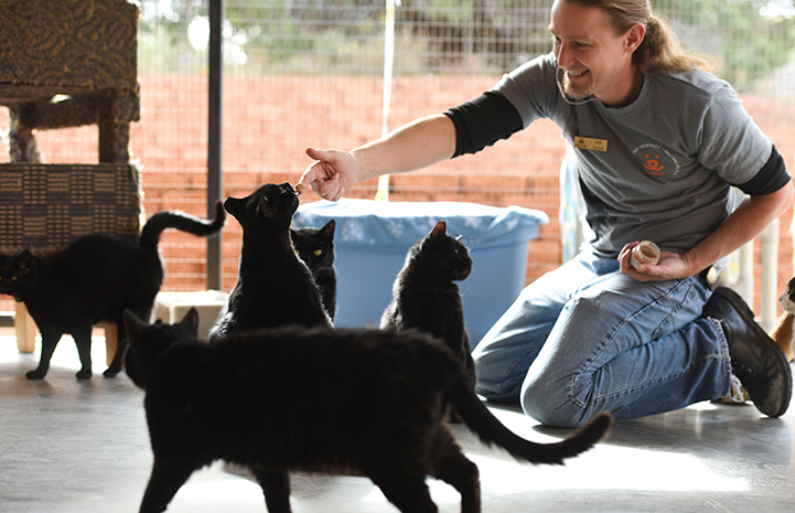 Caregiver Levi Myers playing with five black cats in Cat World