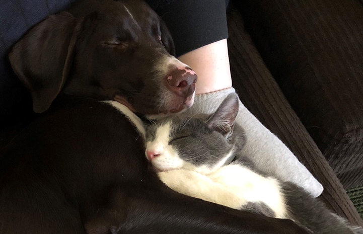 Tank the cat, sleeping next to Gunner the dog, at someone's feet