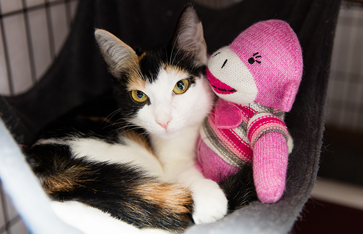 Calico cat lying in a hammock next to a pink monkey stuffed toy