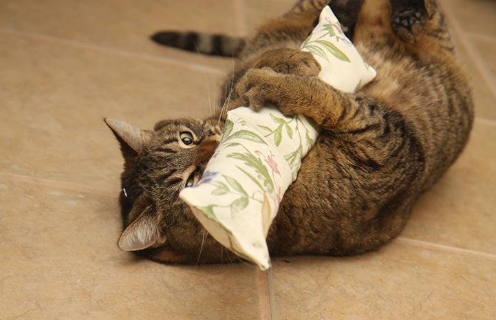 Brown tabby cat hugging a catnip kick toy