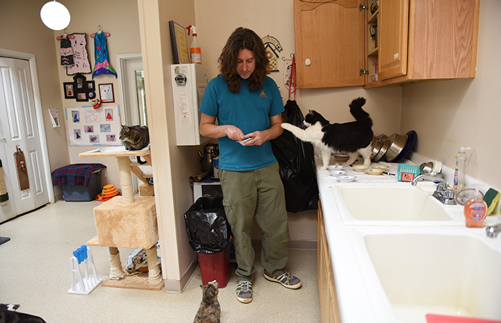Zorro, the black and white tuxedo cat, reaching out with is paw toward Eric the caregiver