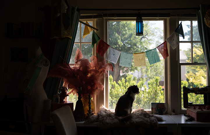 A silhouette of Leroy Jenkins the cat in front of a window with some prayer flags above him