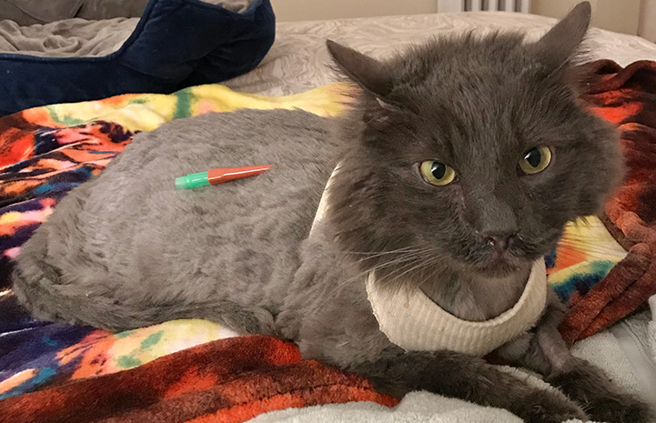 Elroy the cat with a catheter in his back