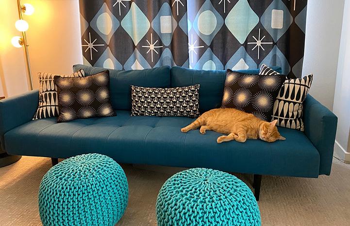 Orange tabby cat Steak lying on a couch