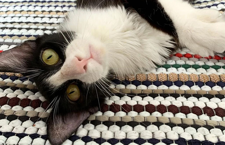 Gizmo the cat lying upside-down on a blanket