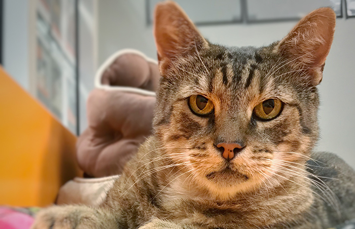 Chance the cat belonged in a home with a family, and so he was moved into a room with other friendly cats