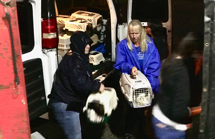 People loading cat carriers into the back of a van at night