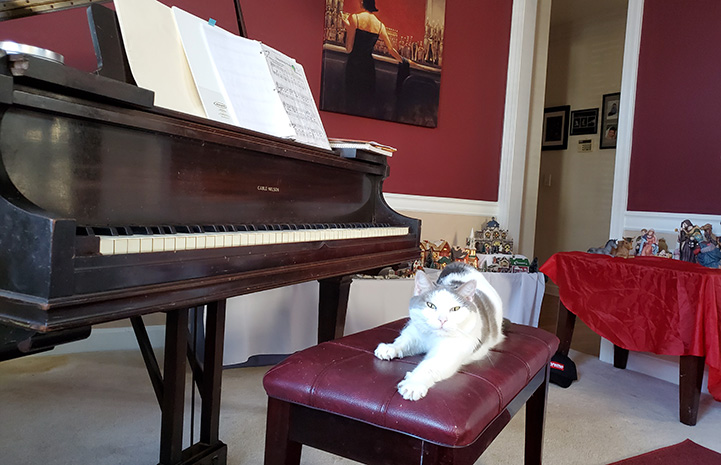 Gertrude the cat lying on a piano bench next to a grand piano
