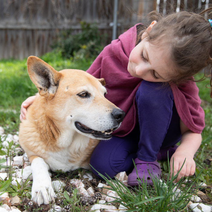 Little girl giving gentle pets to a senior dog