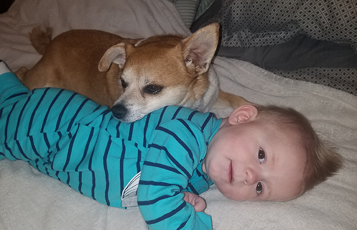 Chancho the Chihuahua shares nap-time with their six-month old grandson