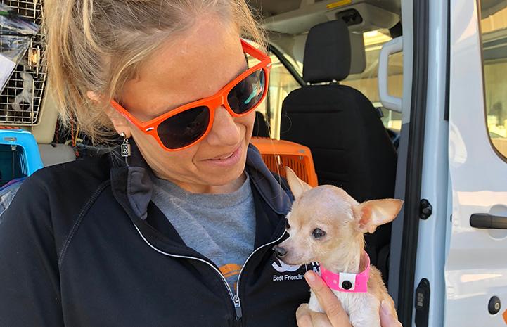 Woman wearing orange sunglasses holding Bambi the Chihuahua